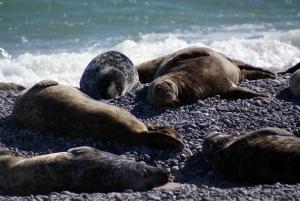 SealsSleepWexlerPsychiatry